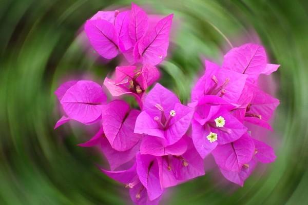 Flower-Kristin Meekhof